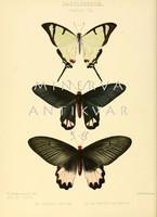 Lepkék, pillangók 5. Vintage/antik zoológiai illusztráció. Kitűnő minőségű reprint nyomat