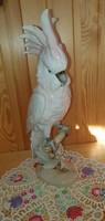 Royal dux parrot